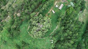 Köylüler gözü gibi bakıyor: 904 yıllık ardıç ağaçları zamana meydan okuyor