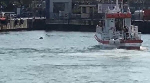 Vapurdan atlayan adamı turist kurtardı