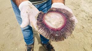 Kuşadası'nda ölü mor denizanaları kıyıya vurdu: Sakın dokunmayın