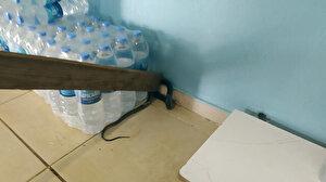 Şanlıurfa'da markette yılan paniği