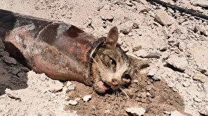 Demir boruya sıkışan kediyi itfaiye kurtardı
