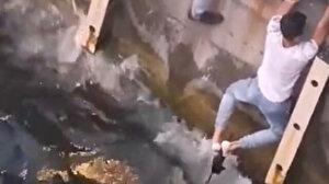 Haliç'e düşen yavru kediyi denizden ayaklarıyla kurtardılar