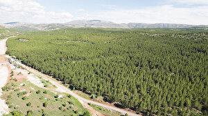 Konya'daki ormanlar için karar: İki ay girişler yasaklandı