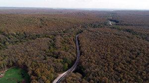 Kırklareli'de ormanlara giriş 1 ay süreyle yasaklandı
