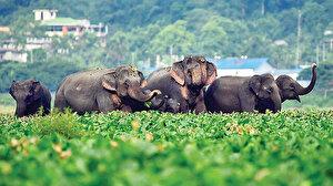 Çin'de filler polis karakoluna girdi