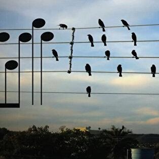 Elektrik tellerine toplanmış kuşları notaya döken sanatçı