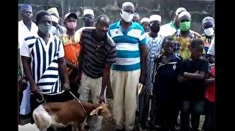 Muslim community in Togo sacrifices animals a...