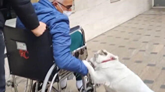 Dog reunites with sick owner after waiting fo...