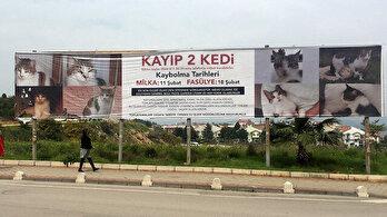 Kaybolan kediler için reklam verdiler