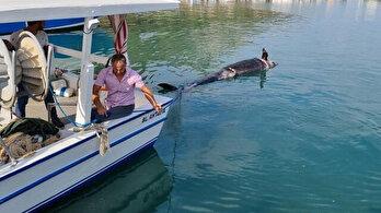 Katil balina kıyıya vurdu