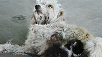 Adorable dog 'Latte' nurses kitten abandoned by mother