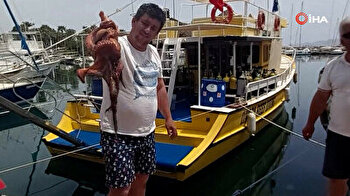 Huge octopus comes to shore in Turkey amid nationwide lockdown