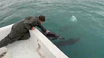 Turkish fisherman strikes up wonderful friendship with dolphins