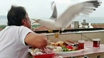 Turkish man befriends gull, feeds it out of his mouth