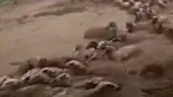 Animals swept away by deadly floods in eastern Turkey