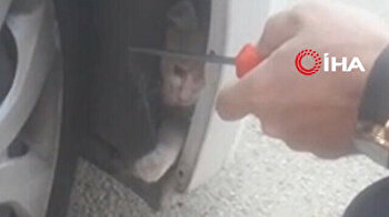 Man saves naughty cat stuck in bumper of his car in Turkey