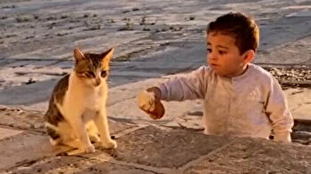 Video of toddler sharing bread with cat at al-Aqsa Mosque goes viral