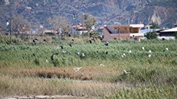 Three new bird species found in southern Turkey