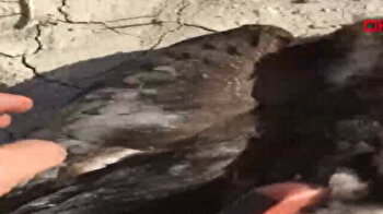 Eagle fitted with transmitter dies after hitting power pole in Turkey