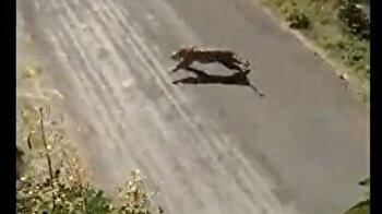 Tiger mauls three people in India