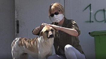 Coronavirus (COVID-19) pandemic hits the animal shelter in Erbil