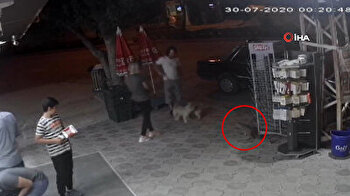 Aggressive stray cat attacks two dogs without warning