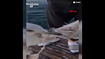 Seagull with fish hook stuck in its wing saved by benevolent Turkish citizens