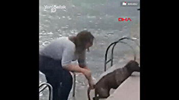 Loving vet jumps into sea fully-clothed to rescue drowning dog