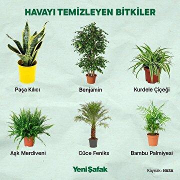havayi-temizleyen-bitkiler