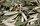 Antakya'nın Tarihi Uzun Çarşısı'nda aktarcılık yapan Semir Eraslan, zeytin yaprağına rağbetin arttığını söyledi. Bölge halkının zeytin yaprağına kolay ulaştığını bu yüzden tüm siparişlerin şehir dışından geldiğini belirten Eraslan, şöyle konuştu: