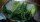 Özellikle Hatay bölgesinde çok kolay bulunabilen bir bitki olan zeytin ağacı yaprağının masrafsız ve hazırlanışı çok kolay olan çayı içmeyi herkese tavsiye eden Çolakoğlu, zeytin yapraklarının kırıldıktan sonra su ile beraber 3- 4 dakika kaynatılıp içilebileceğini ve bunun soğuduktan sonra da dolapta muhafaza edilip aralıklarla tüketilebileceğini anlattı.