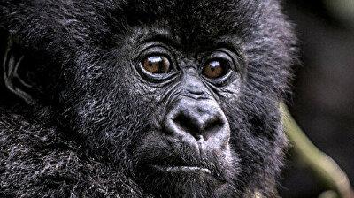 Rwanda names 24 mountain baby gorillas in virtual ceremony