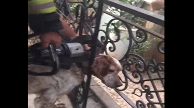 Turkish firefighters free stray dog with head stuck in iron railings