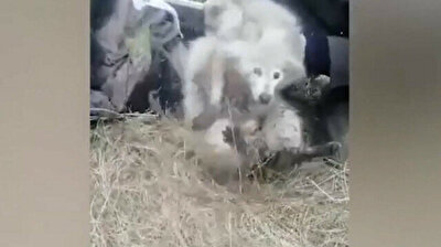 Russian police save albino raccoon, jungle cat stuck together in water well