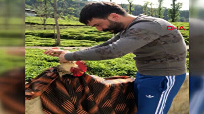 Turkish barber gives his rooster a haircut