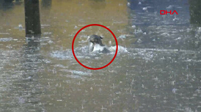 Turkish man saves cat from drowning in flood water in Istanbul
