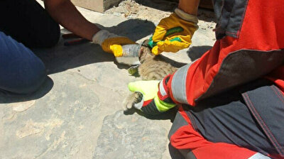 Turkish firefighters rescue cat with head stuck in tin can