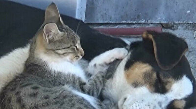 Huckleberry friends: Cat and dog forge strong bond in Turkey
