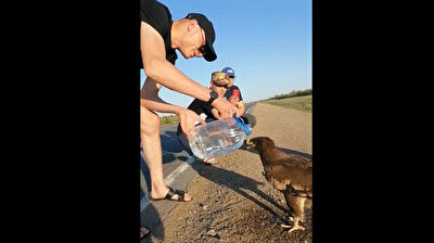 Man feeds thirsty eagle water in act of kindness
