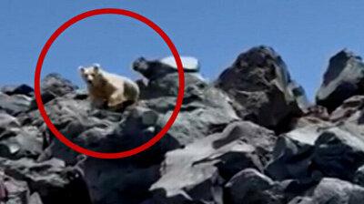 Ukrainian mountaineers encounter albino bear while climbing Turkey's Mount Ararat