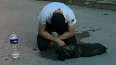 Man sobs after his dog gets knocked by car in Turkey