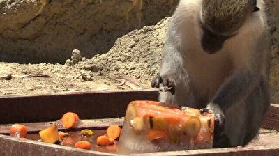 Animals gorge themselves on ice fruit cocktail to cool off at Turkish zoo