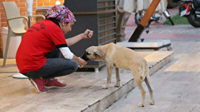 Kind Turkish municipality worker gives thirsty stray dog water to drink amid heatwave