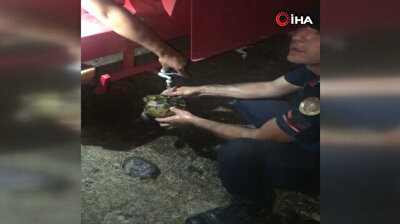 Turkish officials save partly scorched turtle from massive forest fire
