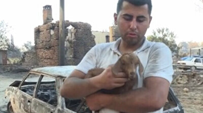 'Miracle' baby goat born during massive forest fire in southern Turkey