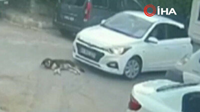 Graphic footage shows cold-blooded driver running over dog in Turkey