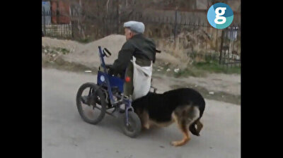 Loyal dog pushes disabled owner's wheelchair in heartwarming video