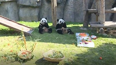 3 giant pandas celebrate birthday in east China