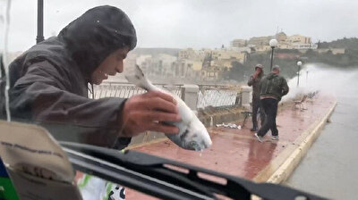 Raining cats and dogs? No, it literally rains fish in Malta