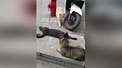 Cat catches her partner flirting with another feline